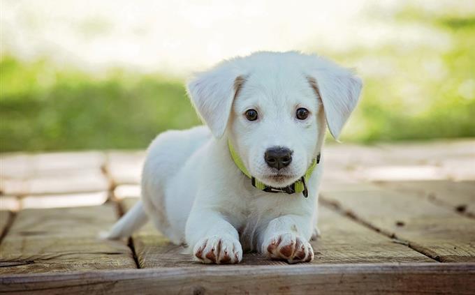 מבחן זיכרון: כלב חמוד