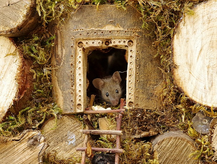 תמונות של עכברים בכפר מיניאטורי: עכבר מציץ מעץ