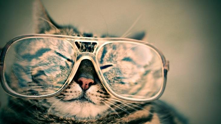 שיטות להסרת שריטות ממשקפי ראייה: חתול מרכיב משקפיים