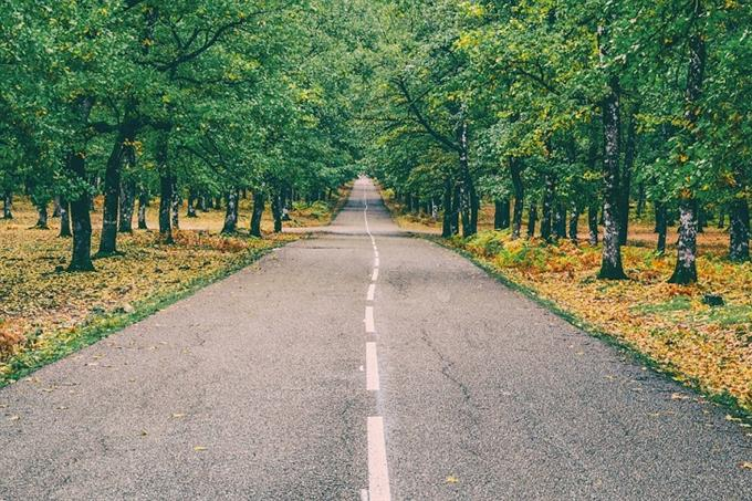 מבחן אישיות מטרה נעלה: כביש ובצידיו שדרות עצים