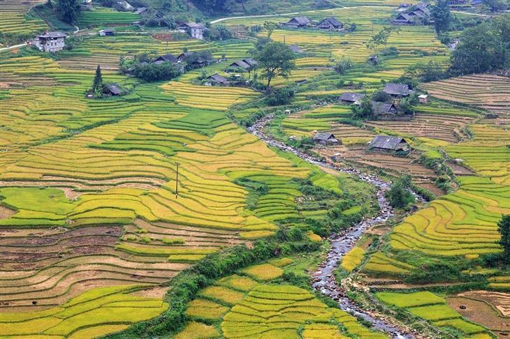 היעדים היפים ביותר בווינטאם: טראסות אורז בסאפה