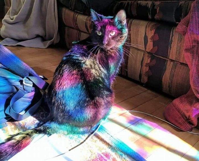 תמונות ברגע הנכון: חתול מואר בשלל צבעי הקשת