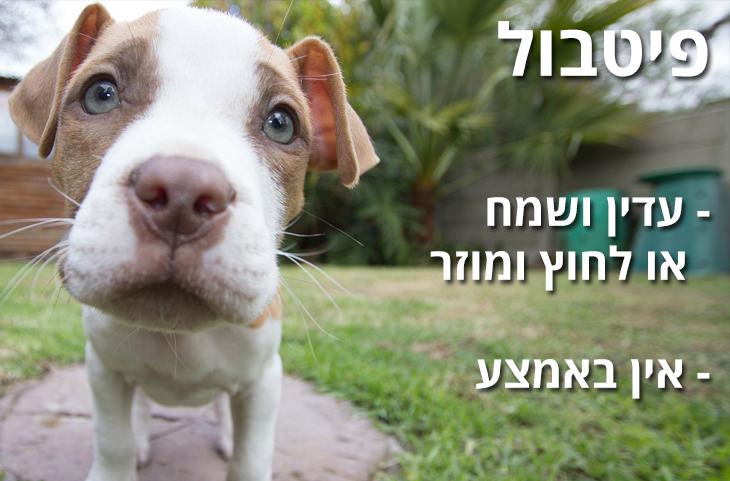 מדריך משעשע להכרת האופי של גזעי כלבים שונים: פיטבול - עדין ושמח או לחוץ ומוזר - אין באמצע
