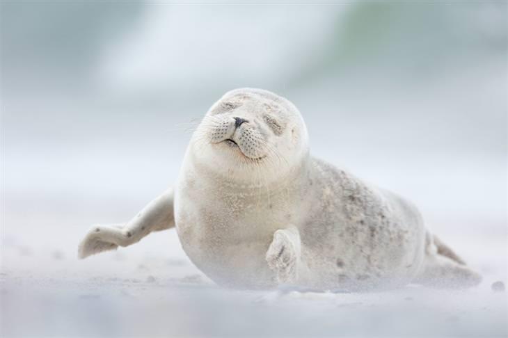 תמונות שחושפות פלאיו של העולם: גור כלבי ים