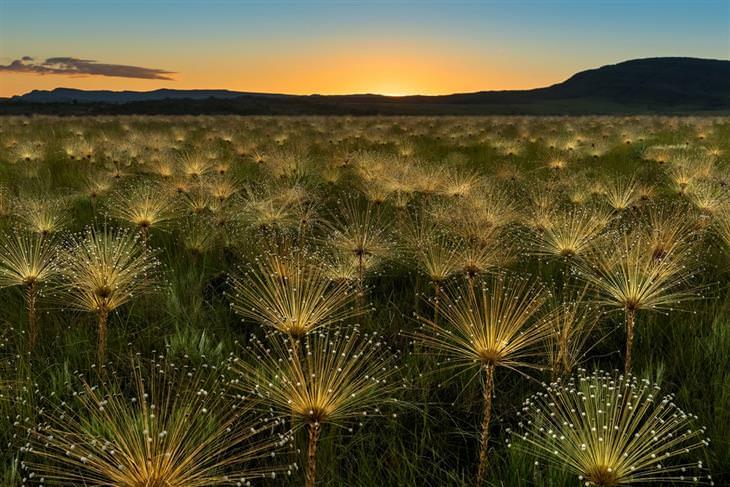 תחרות צילום של סוני: הרים ושדה בזריחה