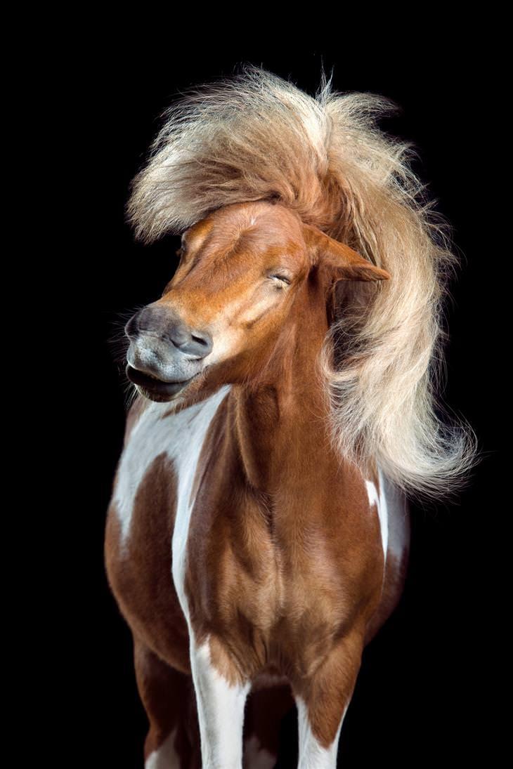 תחרות צילום של סוני: סוס עם בלורית מתנופפת ברוח