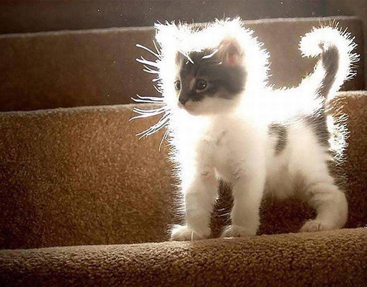חיות חמודות שיפתיעו אתכם: חתלתול שמואר מקרני השמש