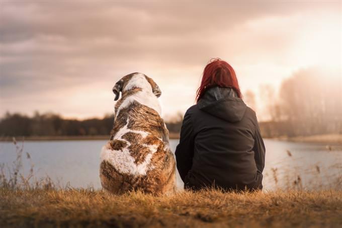 מבחן חברות: אישה יושבת לצד כלב