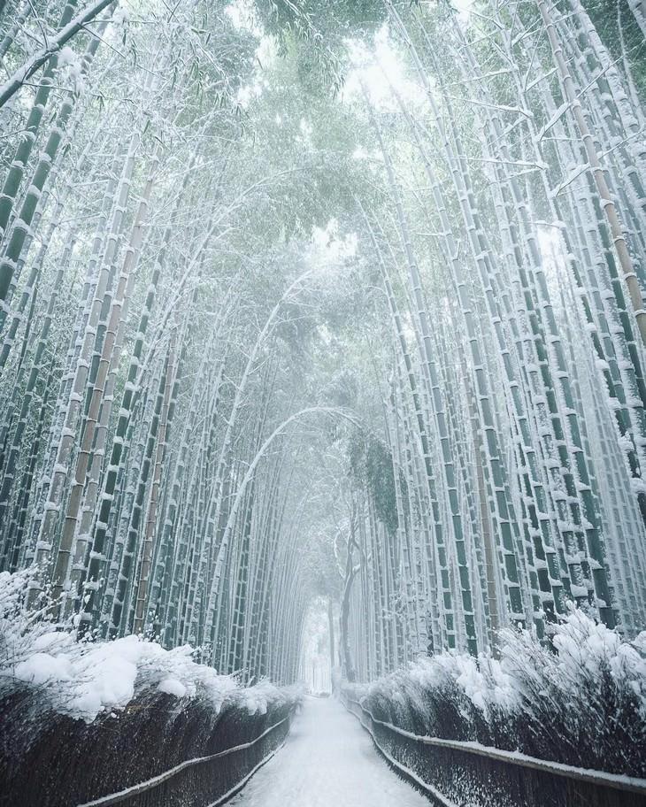 שלמות טבעית מדהימה: יער במבוק מושלג ביפן