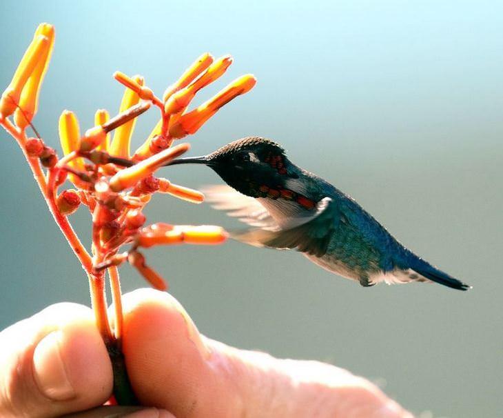 בעלי חיים קטנים: יונק הדבש