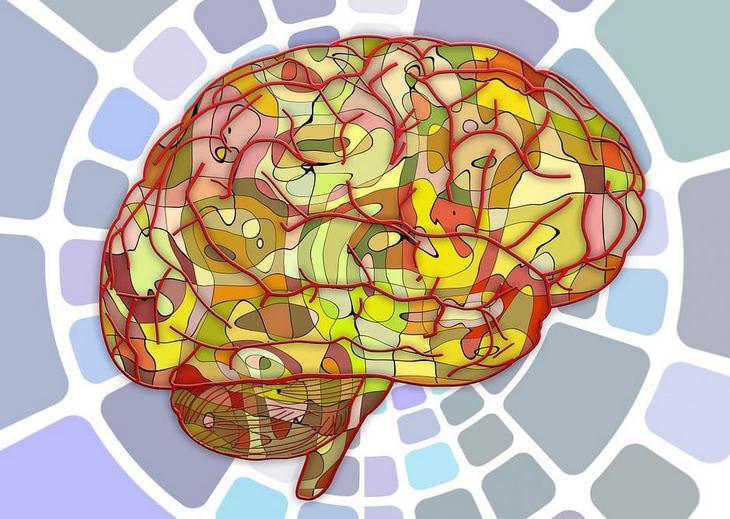 תגליות מדעיות: מוח של אדם