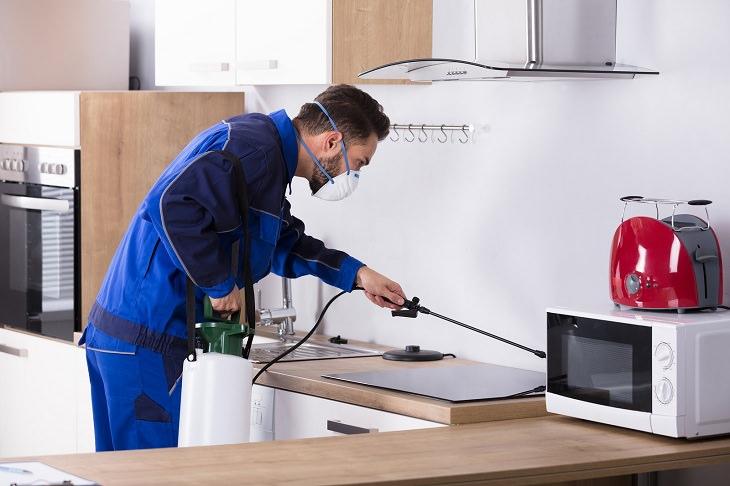 הדברה לבית: מדביר במטבח