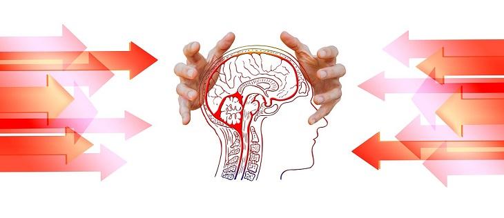 מחקר על שתלי מוחיים לשיפור הזכרון: ידיים תופסות באיור של המוח האנושי