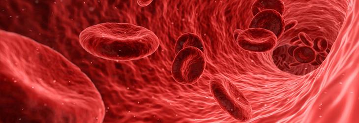 תעלומות על גוף האדם: איור דיגיטלי של כלי דם