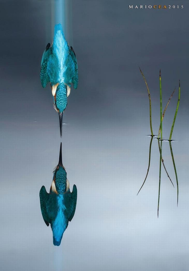 תמונות מדהימות ללא פוטושופ: שלדג רגע לפני שהוא צולל למים