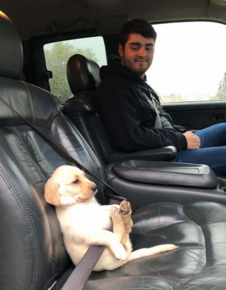 כלבים וחתולים שישכיחו מכם את כל הצרות שלכם: כלבלב יושב חגור בתוך מכונית