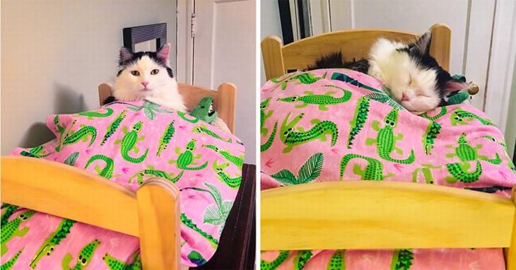 כלבים וחתולים שישכיחו מכם את כל הצרות שלכם: חתול ישן במיטה שמותאמת למידותיו