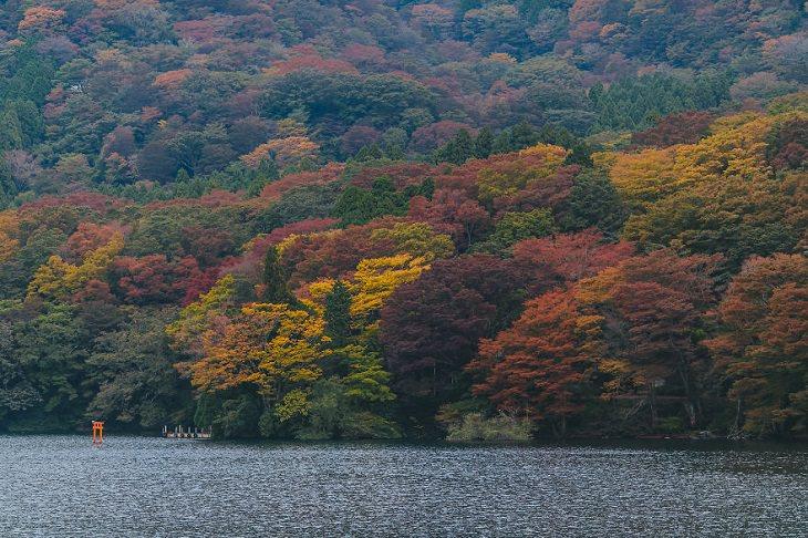 יפן ב-14 ימים: אגם אשנוקו, הקונה