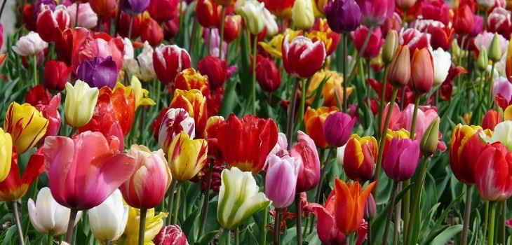 בדיחה על סידורי קבורה של אלמנה עשירה: פרחים בשלל צבעים
