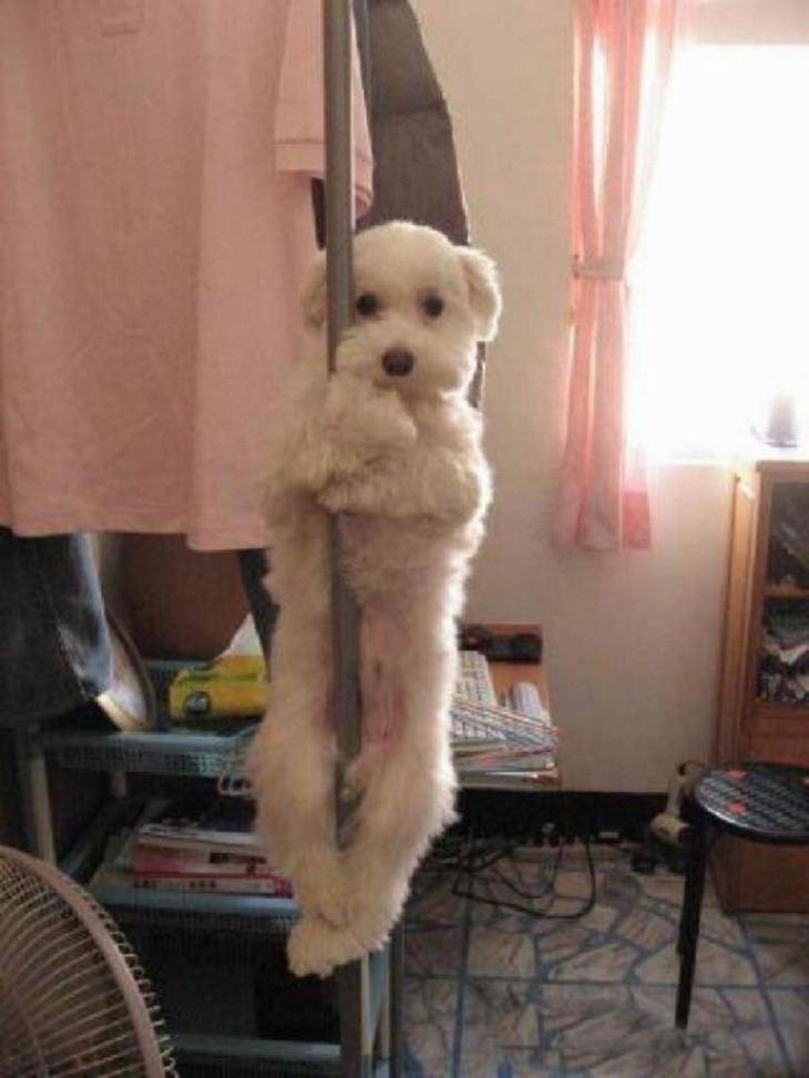 חיות שובבות ומצחיקות: כלב על מוט