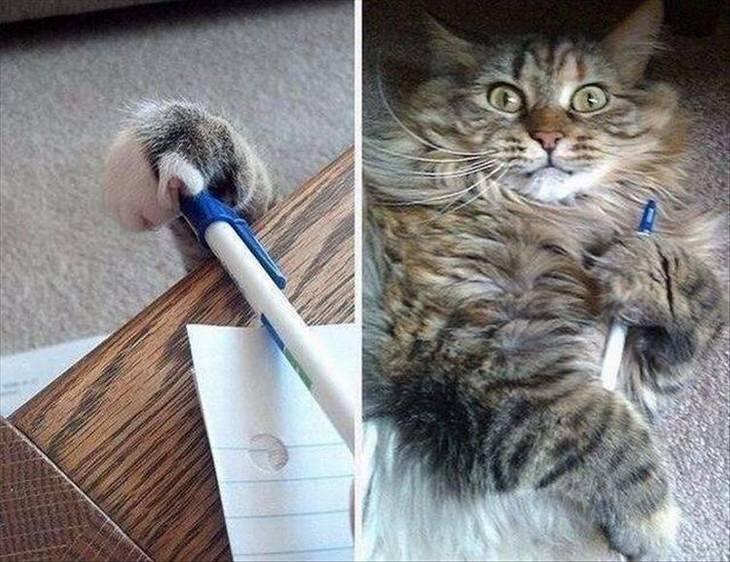חיות שובבות ומצחיקות: חתול גונב עט