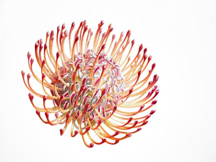 פרחים מצבעי מים: ציור של פרח - דניס רמסי