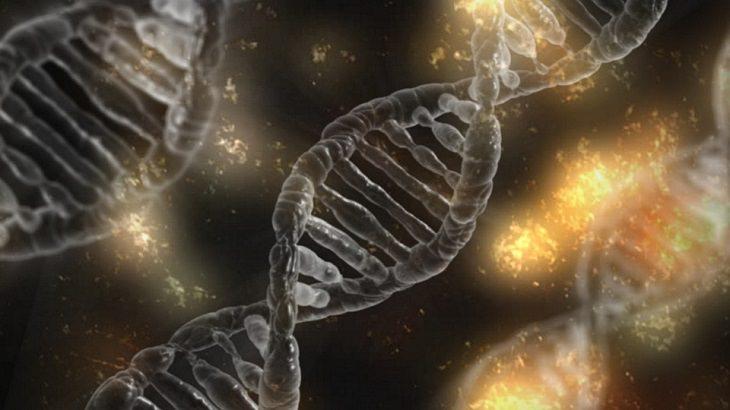 מחקר פורץ דרך: DNA