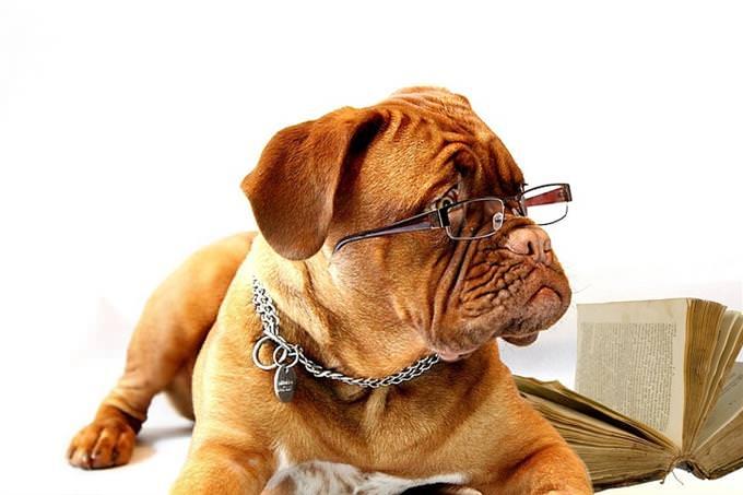 חידון עיניים: כלב עם משקפיים