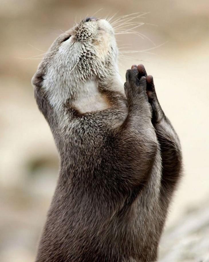 תמונות מצחיקות: בונה בתנוחה כאילו מתפלל