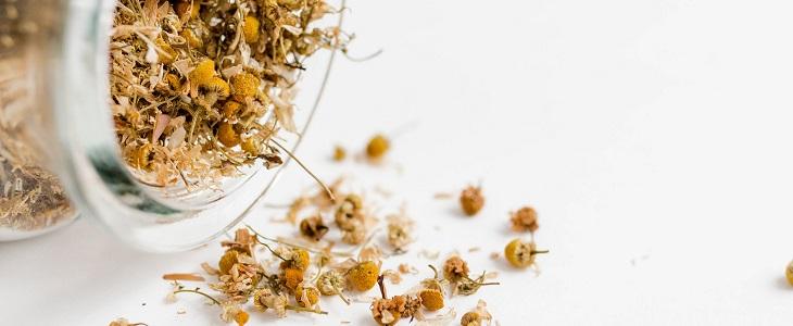 חריקת שיניים: פרחי קמומיל מיובשים