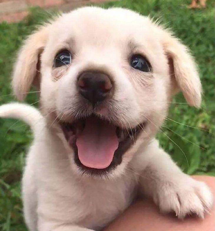 חיות חמודות: גור כלבים