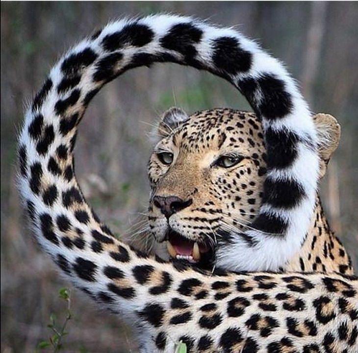 חיות חמודות: ברדלס
