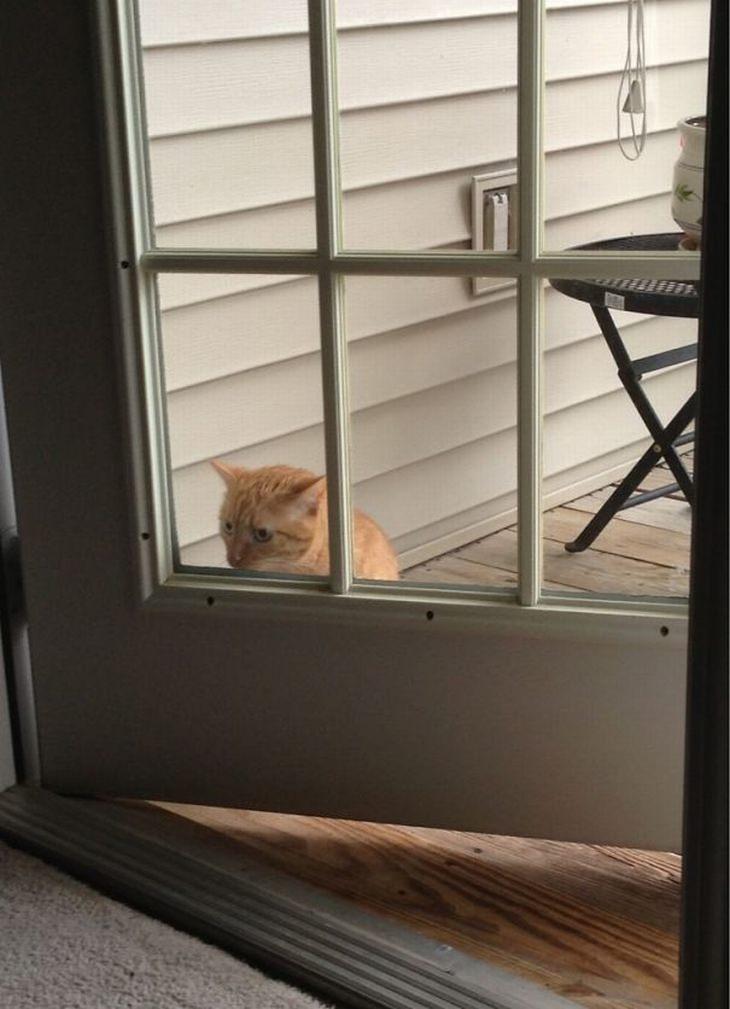 חתולים מבולבלים: חתול עומד מחוץ לדלת פתוחה