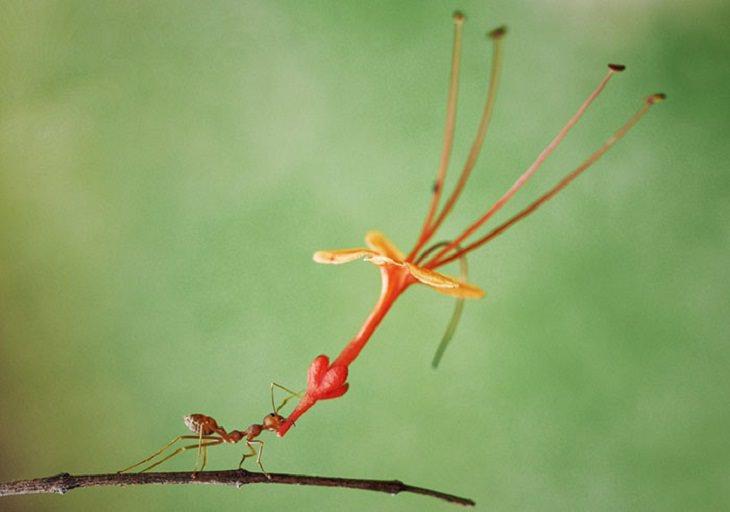 חיות מצחיקות: נמלה סוחבת פרח