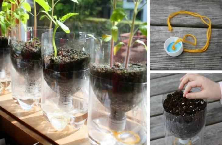 טיפים לגינון: הכנת עציץ שלא צריך השקייה יומית