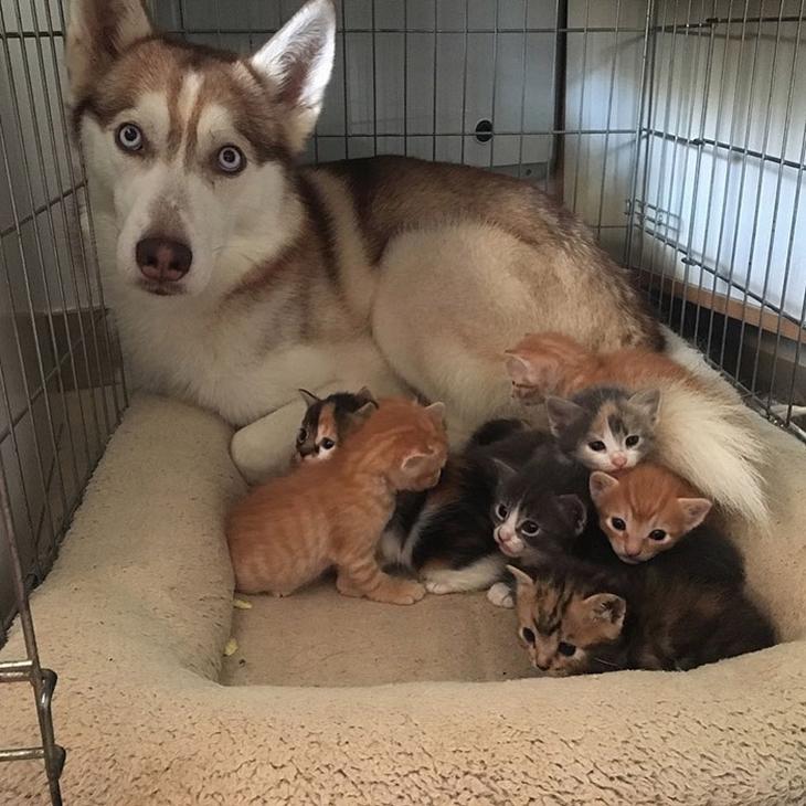 בעלי חיים חמודים במיוחד: כלב מוקף בחתלתולים