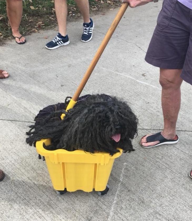 בעלי חיים חמודים במיוחד: כלב בתוך דלי של סחבה, שנראה בעצמו כמו סחבה
