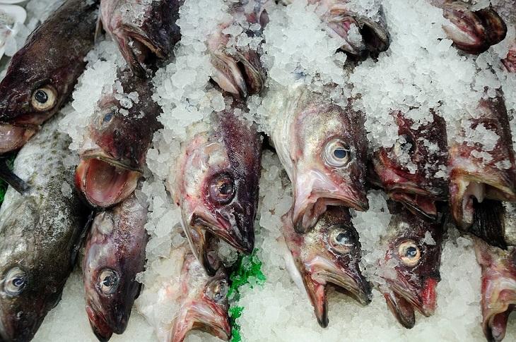 מדריך הדגים המלא: דגים מוצגים למכירה, עטופים בקרח