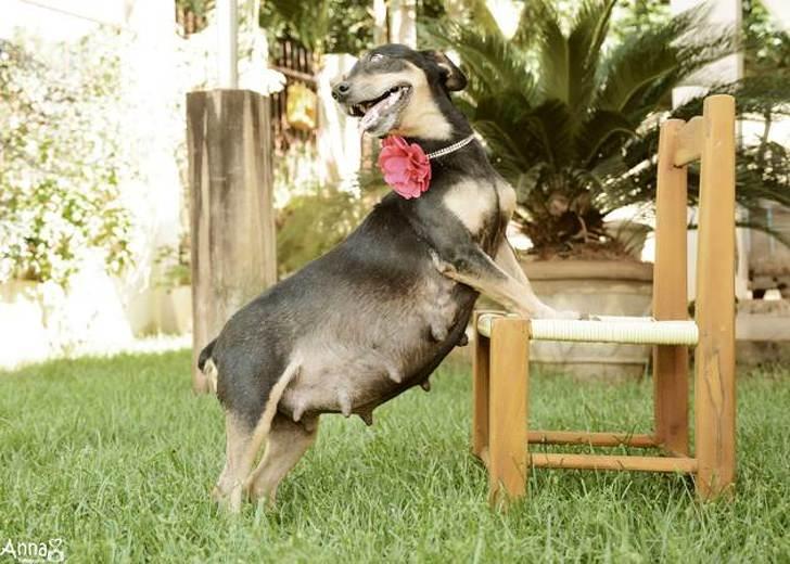 חיות מחייכות: כלבה בהריון מחייכת