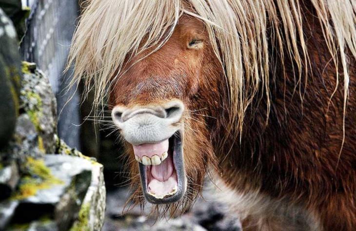 חיות מחייכות: סוס מחייך