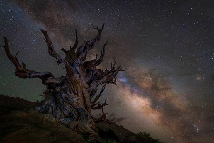 תחרות צלם השנה בתחום האסטרונומיה: שביל החלב מעל היער הלאומי איניו שבקליפורניה