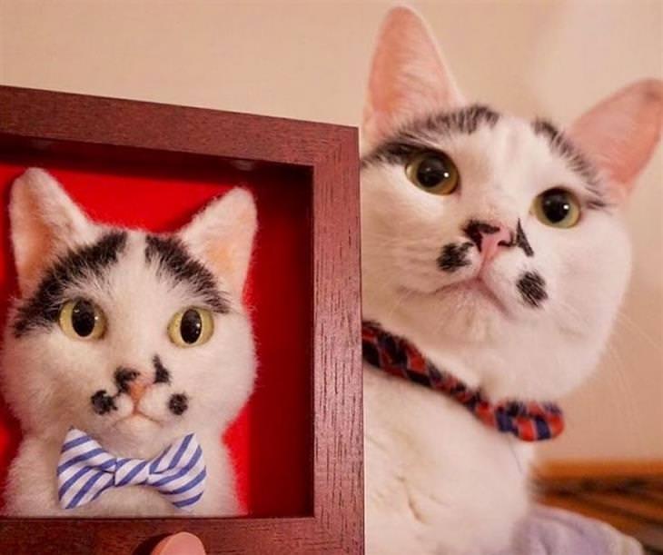 דיוקנאות של חתולים: חתול אמיתי ליד דיוקן של חתול במסגרת עץ