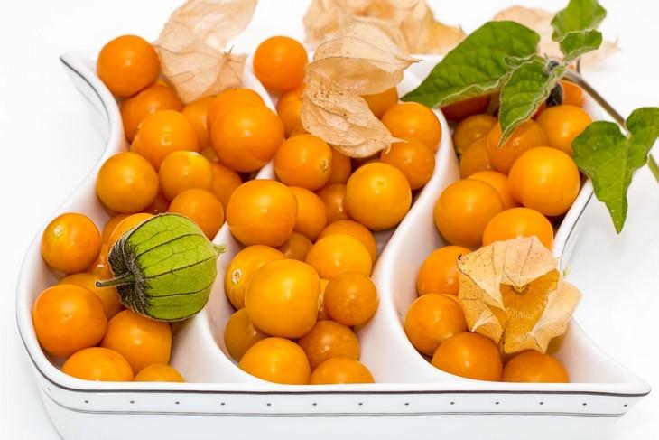 יתרונות בריאותיים לגולדן ברי: פירותיו של צמח הגולדן ברי
