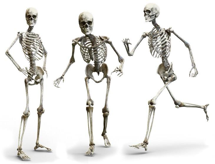 יתרונות בריאותיים של סויה: שלושה שלדים, אחד רץ, אחד הולך ואחד עומד