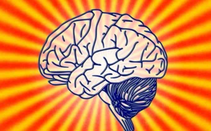 חידון טריוויה גוף האדם: מוח אנושי מצוייר על רקע צבעוני
