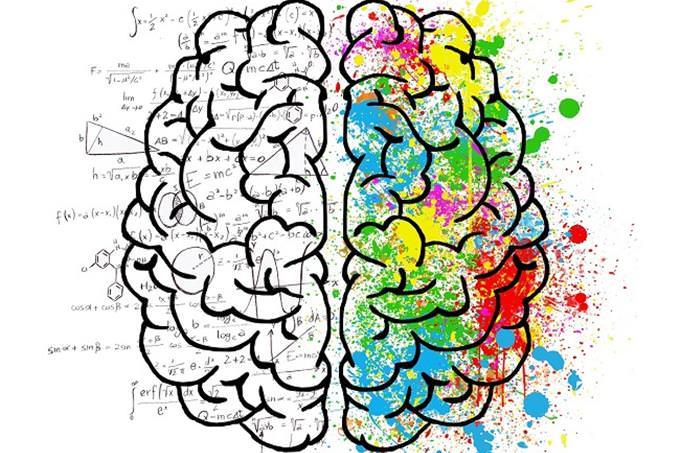 שאלון אישיות - מהו סיפור החיים שלך: איור של שני צידי המוח, היצירתי והאנליטי