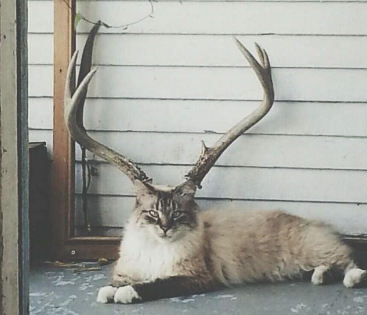 תמונות ברגע הנכון: חתול יושב מול קרניים של אייל