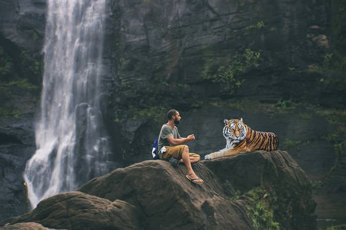 מבחן הישרדות בג'ונגל: איש יושב לצד נמר מול מפל מים