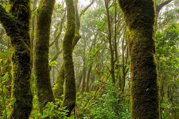 מבחן הישרדות בג'ונגל: ג'ונגל סבוך