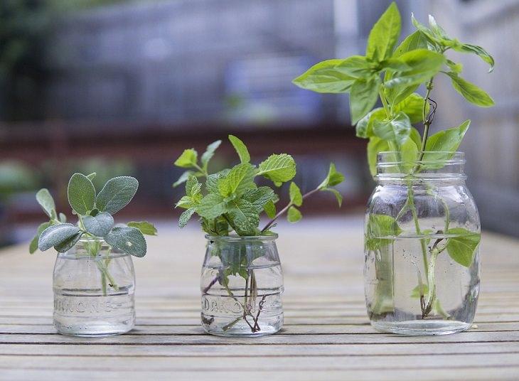 טיפים לשמירה על טריות עשבי תיבול: 3 צנצנות מלאות במים עם עשבי תיבול שונים